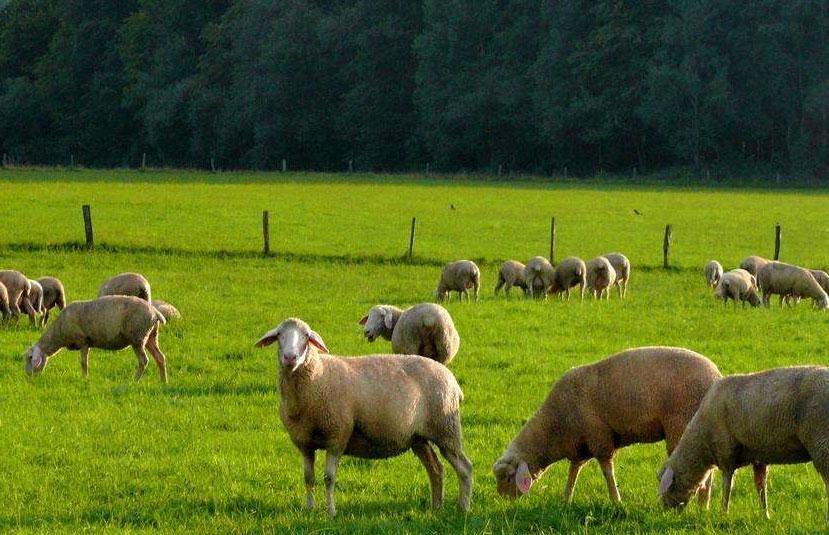 养牛业成为近两年的一大亮点!