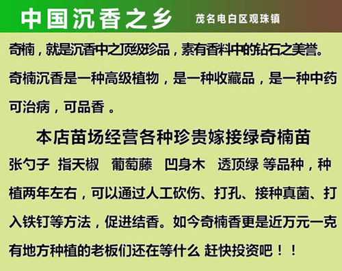 中国金砖彩票网之乡
