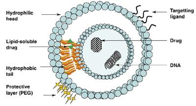 脂质体结构与包载示意图.png