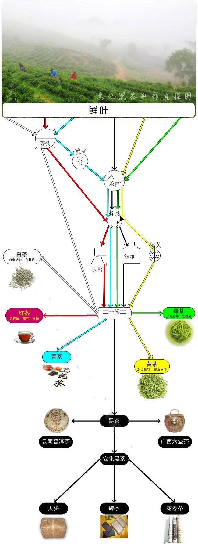 安化黑茶的制作流程