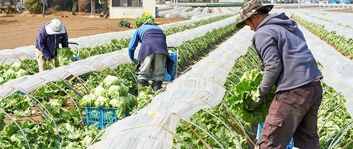 农资涨价成定局!种植模式生变