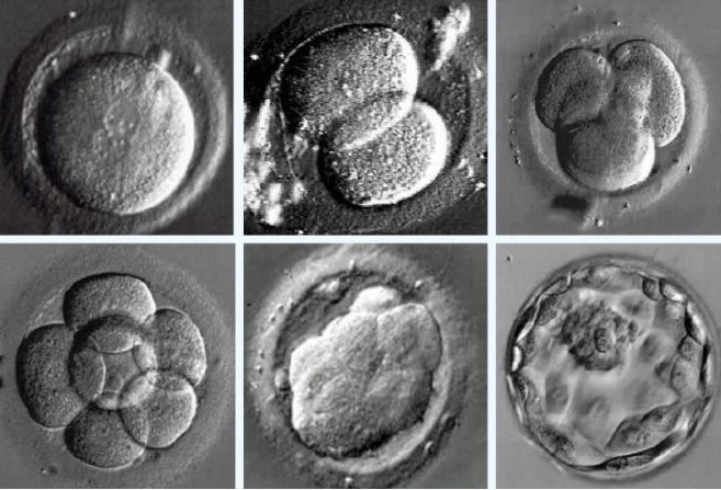 IVF工作站--胚胎體外發育過程觀察.png