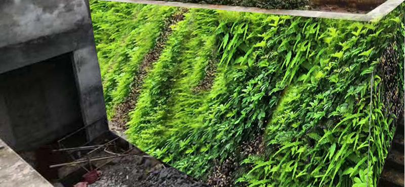 海南省乐东县植物墙