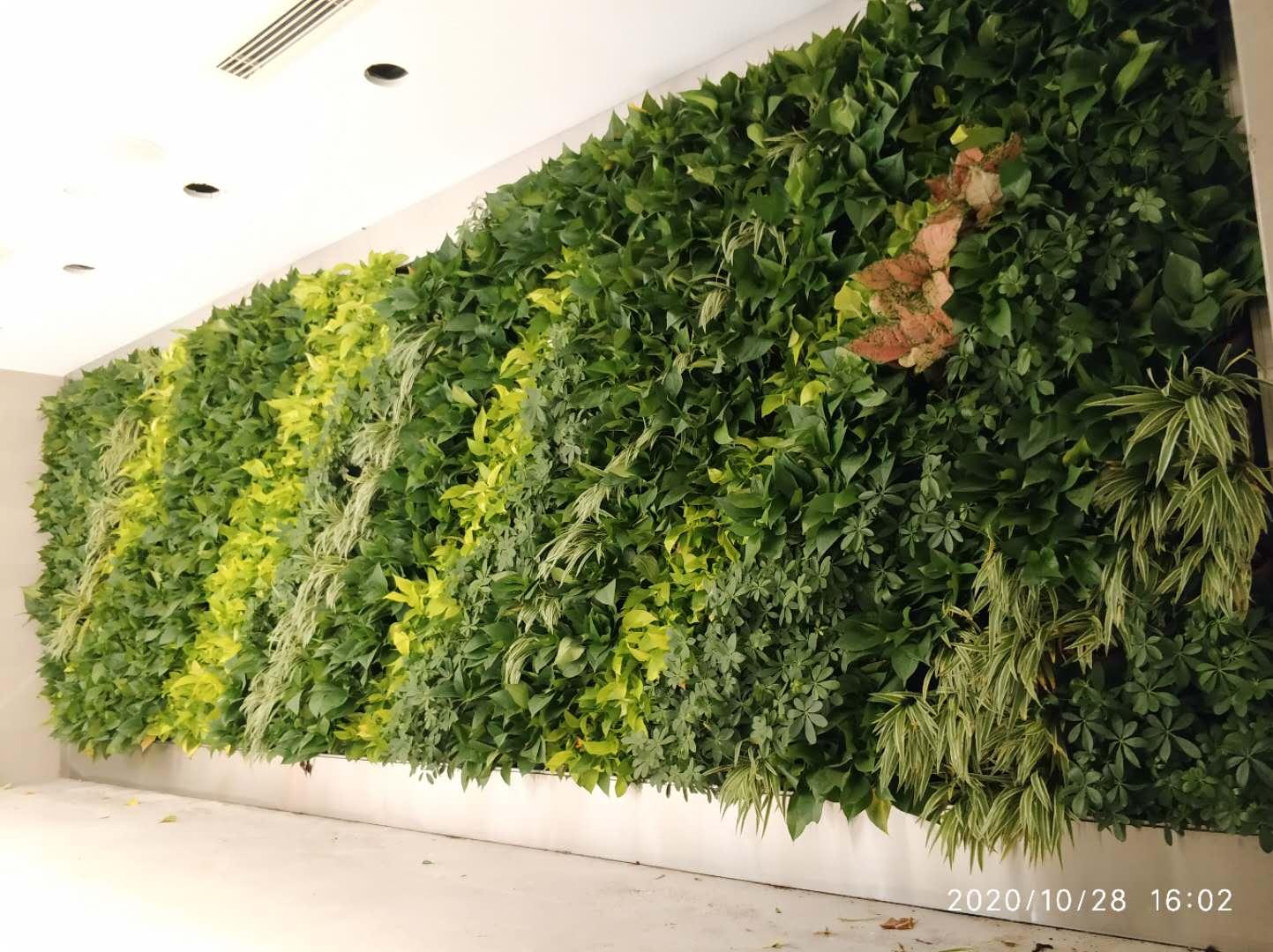 海口美兰机场植物墙、美兰机场垂直绿化